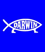 Бейсболка Darvin - рыбка