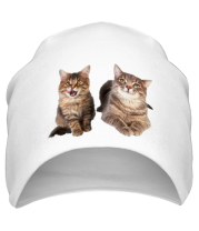 Шапка Кошка и котёнок
