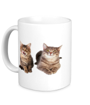 Кружка Кошка и котёнок