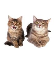 Женская футболка  Кошка и котёнок