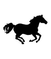 Толстовка Лошадь